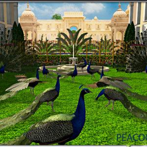 deco peacocks